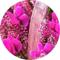 Montpellier-Flowers-Cheltenham-Basket_4