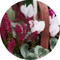 Montpellier-Flowers-Cheltenham-Basket_6